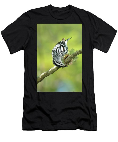 Black And White Warbler Men's T-Shirt (Athletic Fit)