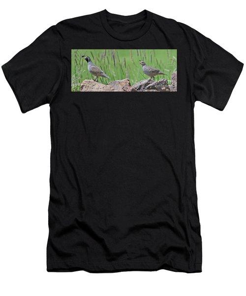 California Quail Men's T-Shirt (Athletic Fit)