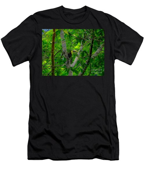Chestnut-mandibled Toucan Men's T-Shirt (Athletic Fit)