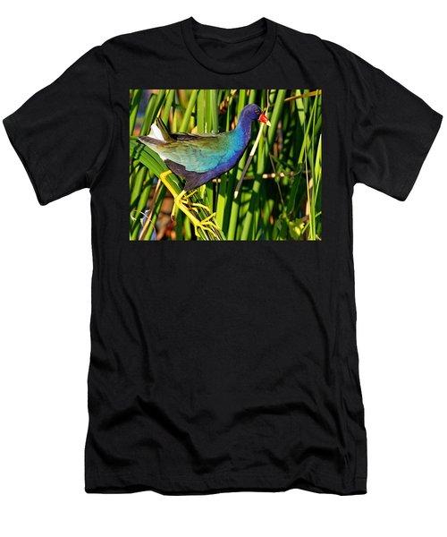 Purple Gallinule Men's T-Shirt (Athletic Fit)