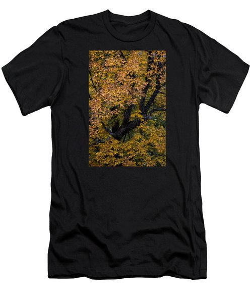 Fall Color Virginia West Virginia Men's T-Shirt (Athletic Fit)