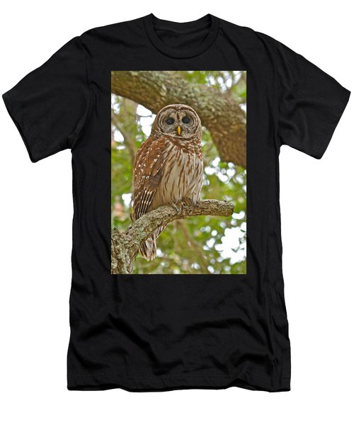 A Barred Owl Men's T-Shirt (Athletic Fit)