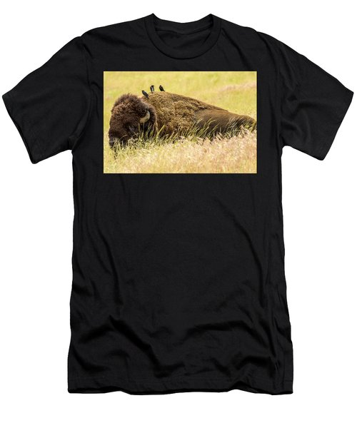 A Bison And The Freeloaders Men's T-Shirt (Athletic Fit)