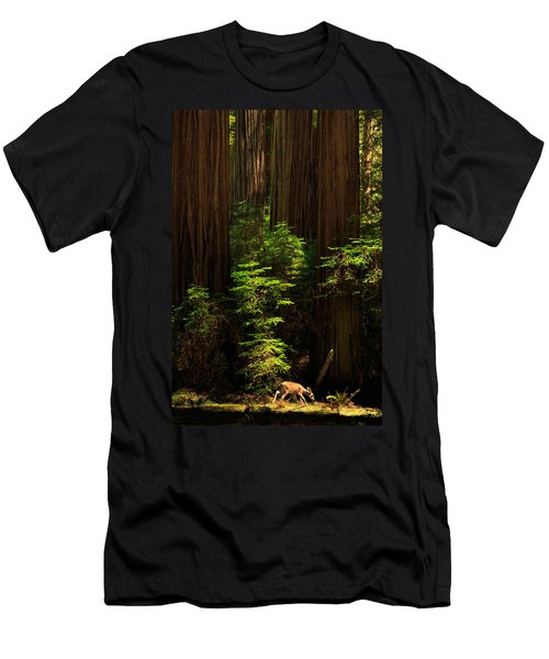 A Deer In The Redwoods Men's T-Shirt (Athletic Fit)