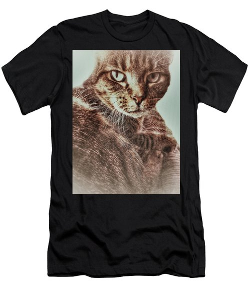 A Female Tabby Cat Men's T-Shirt (Athletic Fit)