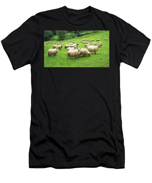 A Flock Of Sheep Men's T-Shirt (Athletic Fit)