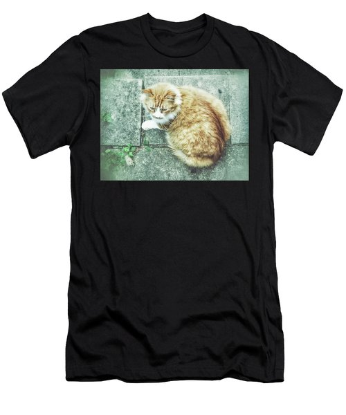 A Ginger Cat Men's T-Shirt (Athletic Fit)