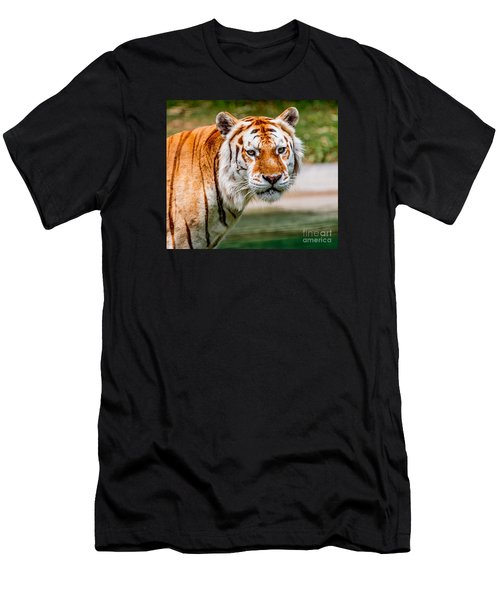 Aging Tiger Men's T-Shirt (Athletic Fit)