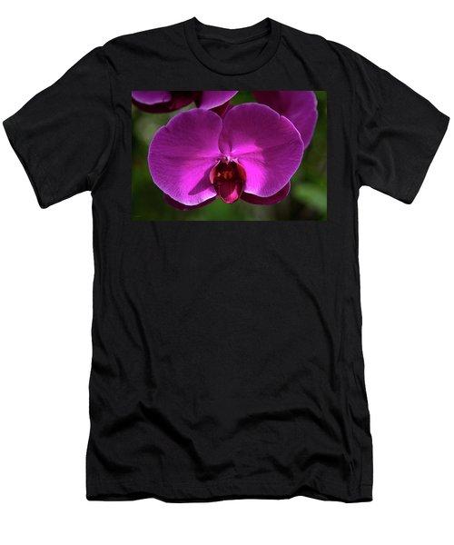 Allan Gardens Orchid Men's T-Shirt (Athletic Fit)