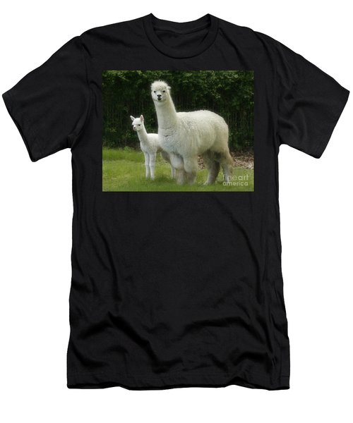 Alpaca And Foal Men's T-Shirt (Athletic Fit)