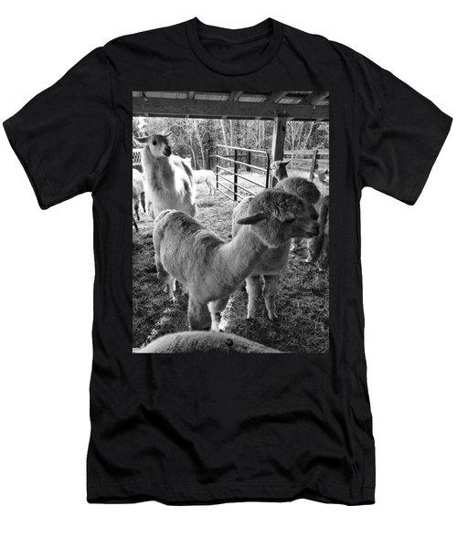 Alpaca Meeting  Men's T-Shirt (Athletic Fit)