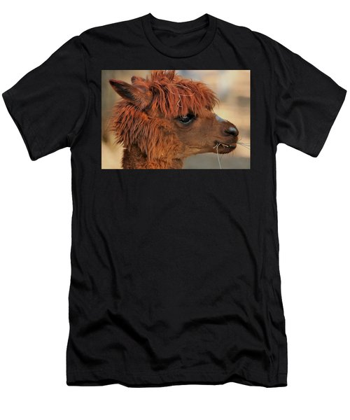 Alpaca Portrait Men's T-Shirt (Athletic Fit)