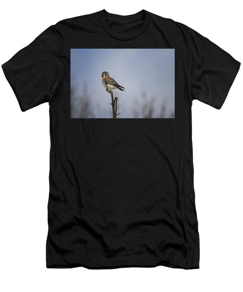 American Kestrel Men's T-Shirt (Athletic Fit)