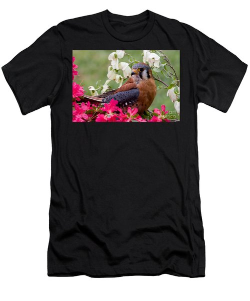 American Kestrel In The Springtime Men's T-Shirt (Athletic Fit)