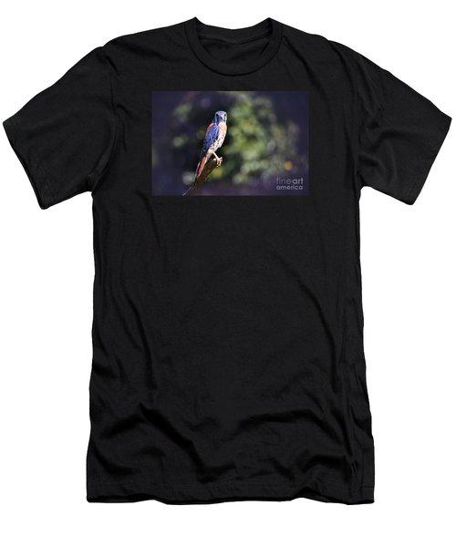 American Kestrel Men's T-Shirt (Athletic Fit)