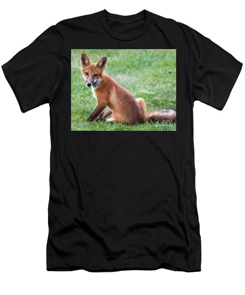 American Red Fox  Men's T-Shirt (Athletic Fit)