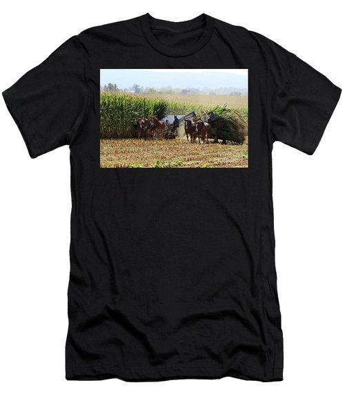 Amish Men Harvesting Corn Men's T-Shirt (Athletic Fit)