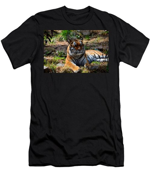 Men's T-Shirt (Slim Fit) featuring the mixed media Amur Tiger 10 by Angelina Vick