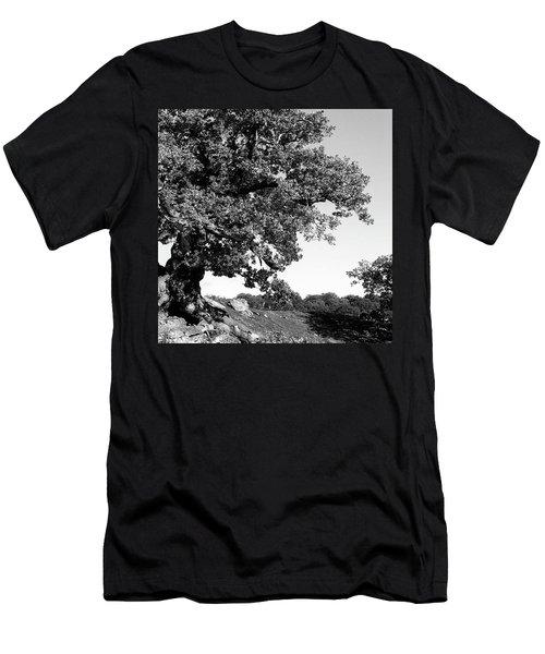 Ancient Oak, Bradgate Park Men's T-Shirt (Slim Fit) by John Edwards