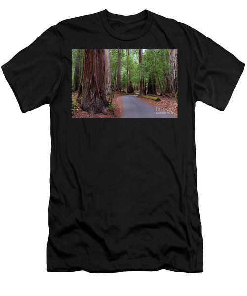 Ancient Redwoods Men's T-Shirt (Athletic Fit)