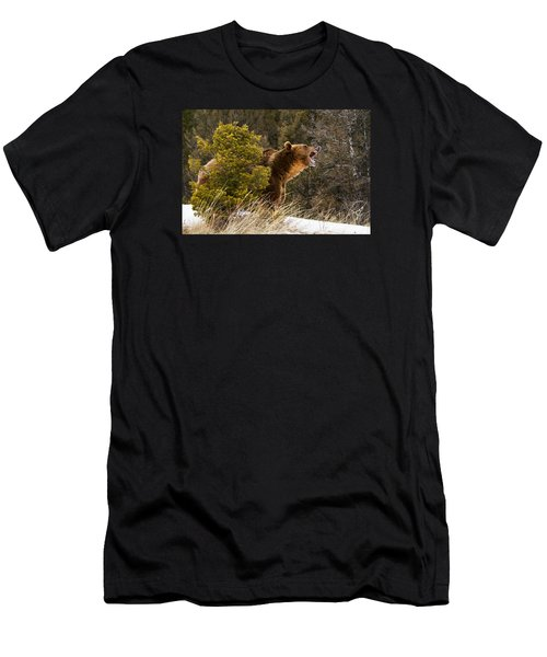 Angry Grizzly Behind Tree Men's T-Shirt (Athletic Fit)