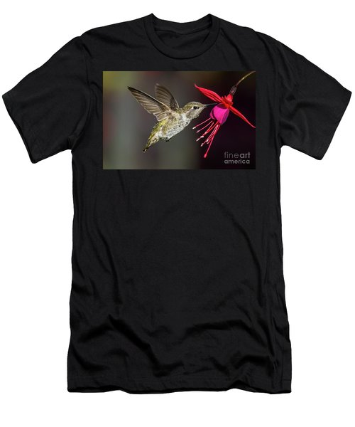 Anna Immature Hummingbird Men's T-Shirt (Athletic Fit)