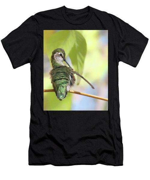 Anna's Hummingbird - Preening Men's T-Shirt (Athletic Fit)