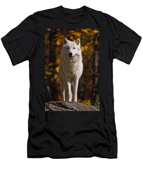 Men's T-Shirt (Slim Fit) featuring the photograph Arctic Wolf On Rocks by Michael Cummings