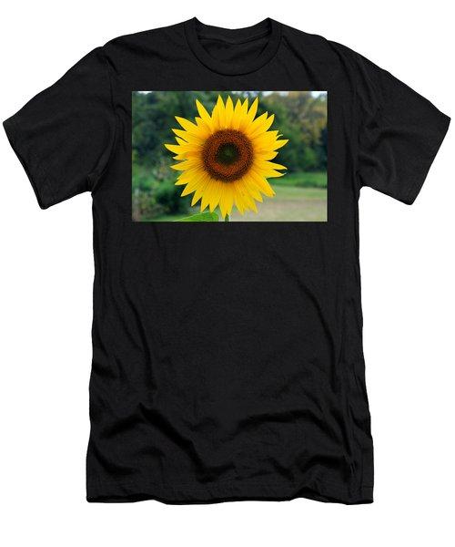 August Sunflower Men's T-Shirt (Athletic Fit)