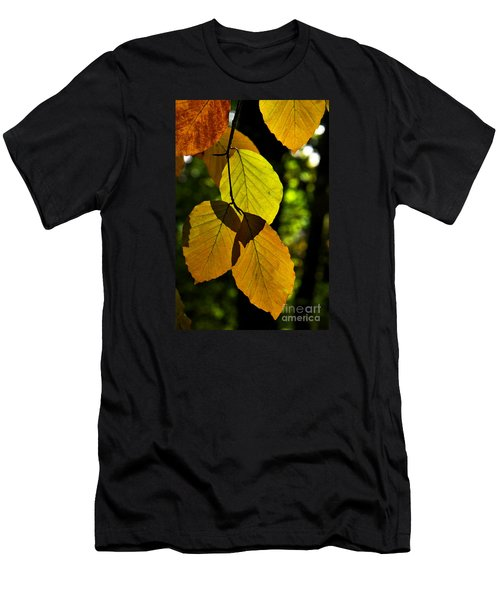 Autumn Beech Tree Leaves Men's T-Shirt (Athletic Fit)