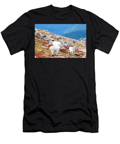 Autumn Goats On Mount Bierstadt Men's T-Shirt (Athletic Fit)