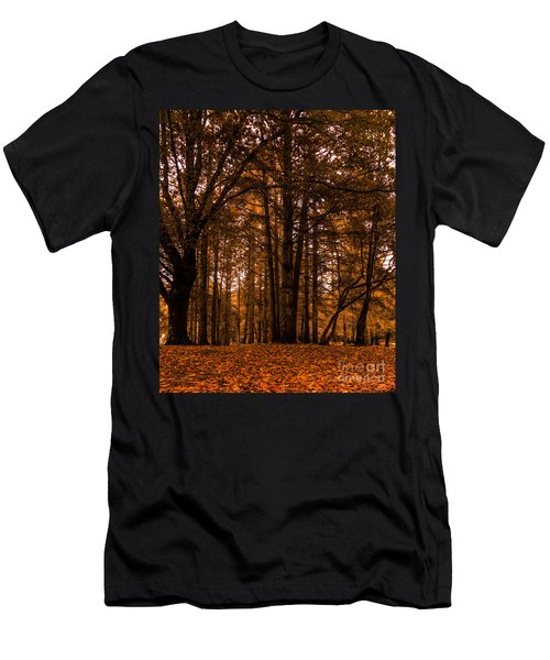 Autumn In Colligan Wood Men's T-Shirt (Athletic Fit)
