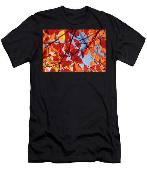 Autumn In The Arboretum Men's T-Shirt (Athletic Fit)