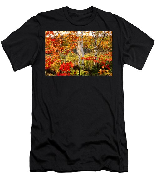 Autumn Scene With Red Leaves And White Birch Trees, Nova Scotia Men's T-Shirt (Athletic Fit)