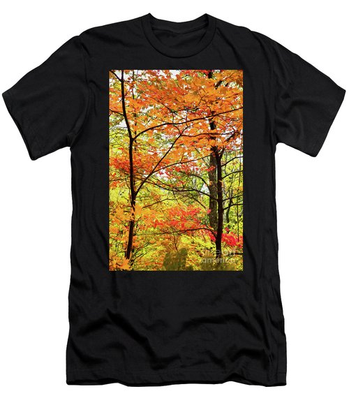 Autumn Splendor Fall Colors Leaves And Trees Ap Men's T-Shirt (Athletic Fit)