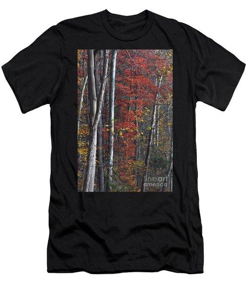 Autumn Trees 8261c Men's T-Shirt (Athletic Fit)