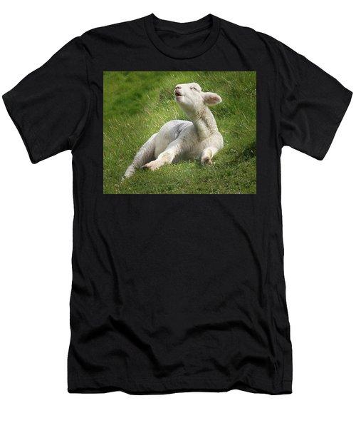 Avebury Lamb Men's T-Shirt (Athletic Fit)