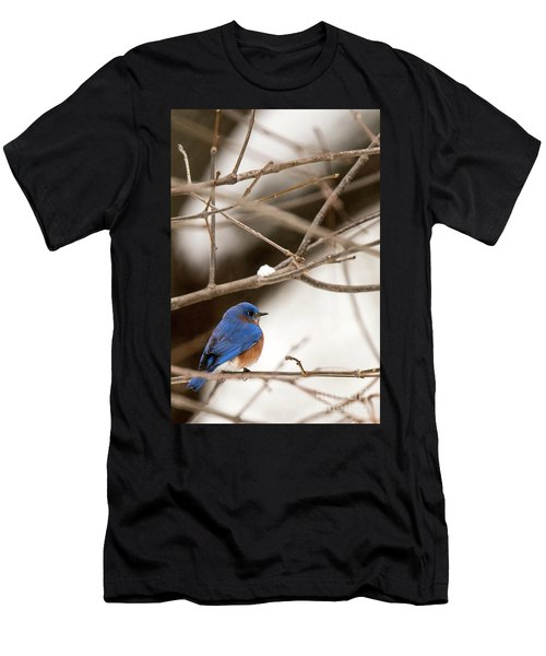 Backyard Bluebird Men's T-Shirt (Athletic Fit)