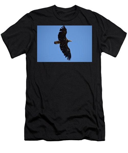 Bald Eagle Juvenile Soaring Men's T-Shirt (Athletic Fit)