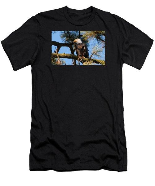Bald Eagle Perch Men's T-Shirt (Athletic Fit)