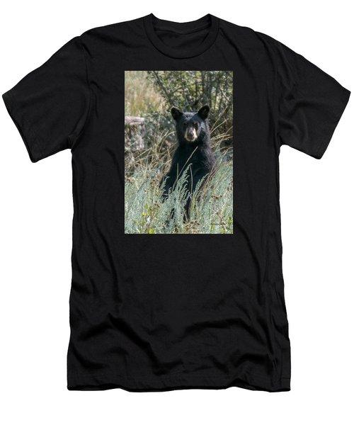 Bear Cub At Waterton Canyon Men's T-Shirt (Athletic Fit)