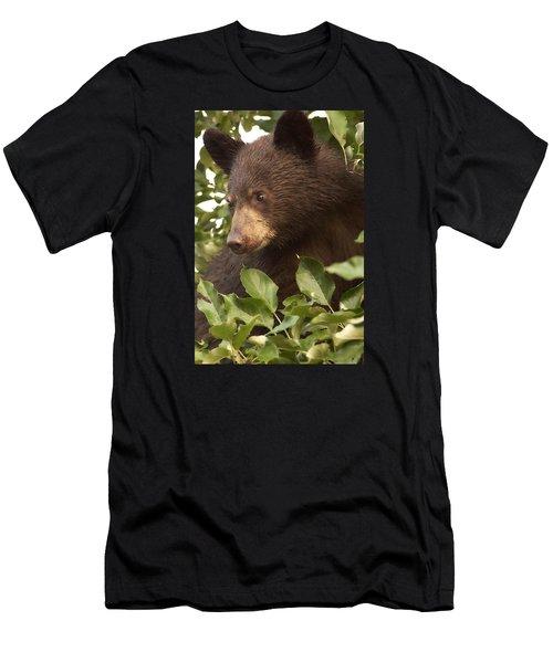 Bear Cub In Apple Tree1 Men's T-Shirt (Athletic Fit)