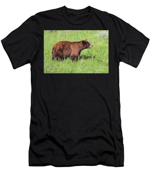 Bear Eating Daisies Men's T-Shirt (Athletic Fit)