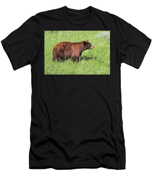 Bear Eating Daisies Men's T-Shirt (Athletic Fit)