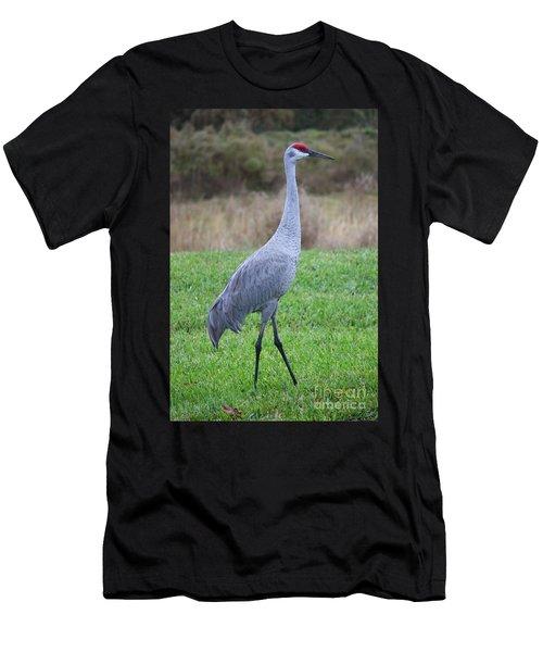 Beautiful Sandhill Crane Men's T-Shirt (Athletic Fit)