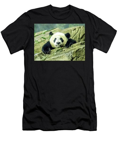 Bei Bei Panda At One Year Old Men's T-Shirt (Athletic Fit)