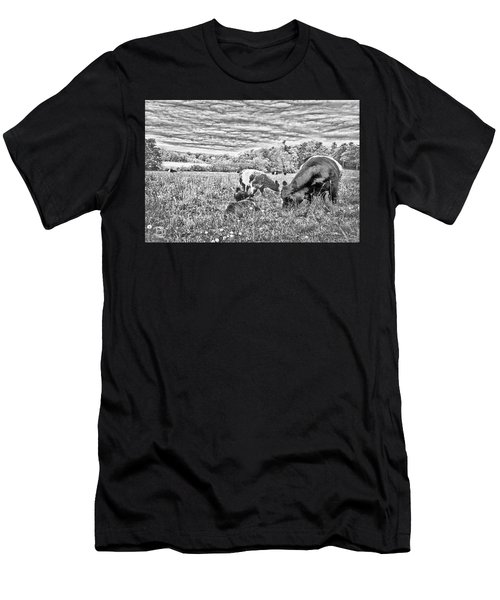 Belted Galloway Beef Cattle Men's T-Shirt (Athletic Fit)