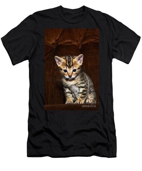 Bengal Kitten - 2 Men's T-Shirt (Athletic Fit)