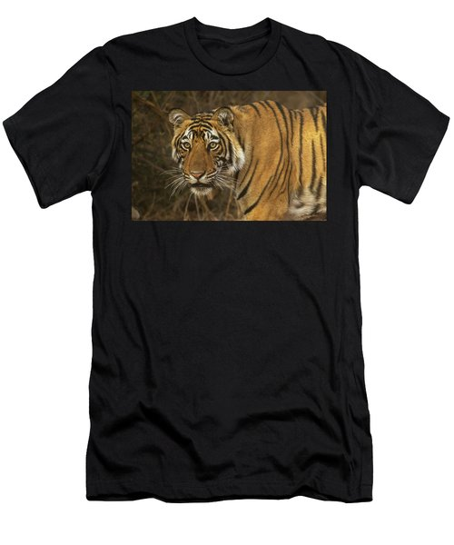 Bengale Tiger Men's T-Shirt (Athletic Fit)