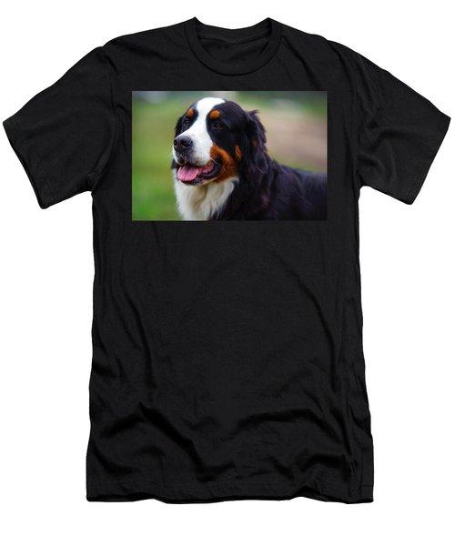 Bernese Mountain Dog Portrait Men's T-Shirt (Athletic Fit)
